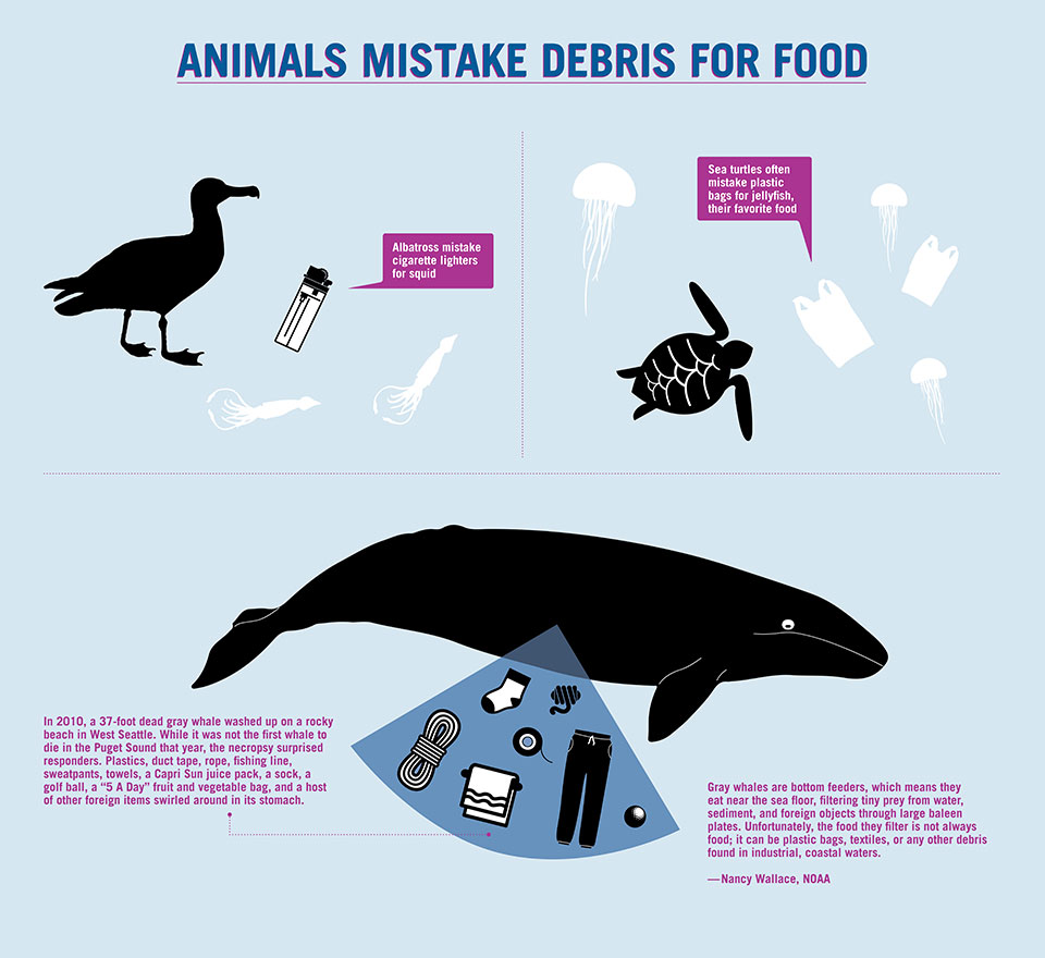animals-mistake-debris-for-food